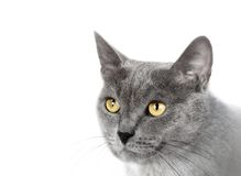 Muzzle a cat. On a white background Stock Photography