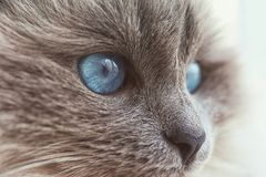 Muzzle of cute cat. Closeup Royalty Free Stock Images