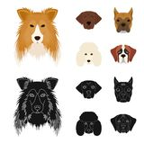 Muzzle of different breeds of dogs.Collie breed dog, lobladore, poodle, boxer set collection icons in cartoon,black. Style vector symbol stock illustration Royalty Free Stock Image