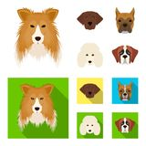 Muzzle of different breeds of dogs.Collie breed dog, lobladore, poodle, boxer set collection icons in cartoon,flat style. Vector symbol stock illustration Stock Images