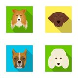 Muzzle of different breeds of dogs.Collie breed dog, lobladore, poodle, boxer set collection icons in flat style vector Royalty Free Stock Photography