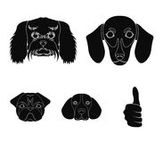 Muzzle of different breeds of dogs.Dog breed of dachshund, lapdog, beagle, pug set collection icons in black style. Vector symbol stock illustration Stock Images