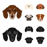 Muzzle of different breeds of dogs.Dog breed of dachshund, lapdog, beagle, pug set collection icons in cartoon,black Stock Images