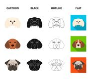 Muzzle of different breeds of dogs.Dog breed of dachshund, lapdog, beagle, pug set collection icons in cartoon,black Royalty Free Stock Photography