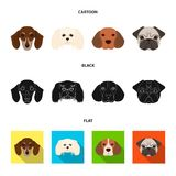 Muzzle of different breeds of dogs.Dog breed of dachshund, lapdog, beagle, pug set collection icons in cartoon,black Royalty Free Stock Photos