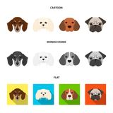 Muzzle of different breeds of dogs.Dog breed of dachshund, lapdog, beagle, pug set collection icons in cartoon,flat Stock Photography