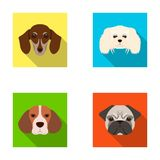 Muzzle of different breeds of dogs.Dog breed of dachshund, lapdog, beagle, pug set collection icons in flat style vector. Symbol stock illustration Royalty Free Stock Images