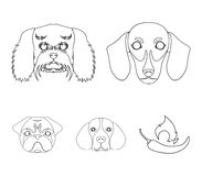Muzzle of different breeds of dogs.Dog breed of dachshund, lapdog, beagle, pug set collection icons in outline style. Vector symbol stock illustration Royalty Free Illustration