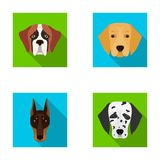 Muzzle of different breeds of dogs.Dog of the breed St. Bernard, golden retriever, Doberman, Dalmatian set collection Royalty Free Stock Photo