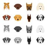 Muzzle of different breeds of dogs.Dog of the breed St. Bernard, golden retriever, Doberman, Dalmatian set collection. Icons in cartoon,monochrome style vector Stock Images