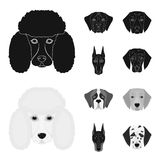 Muzzle of different breeds of dogs.Dog of the breed St. Bernard, golden retriever, Doberman, Dalmatian set collection. Icons in black,monochrom style vector Stock Images