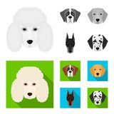 Muzzle of different breeds of dogs.Dog of the breed St. Bernard, golden retriever, Doberman, Dalmatian set collection. Icons in monochrome,flat style vector Royalty Free Stock Images