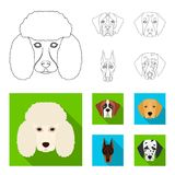 Muzzle of different breeds of dogs.Dog of the breed St. Bernard, golden retriever, Doberman, Dalmatian set collection. Icons in outline,flat style vector symbol Stock Images