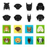 Muzzle of different breeds of dogs.Dog of the breed St. Bernard, golden retriever, Doberman, Dalmatian set collection. Icons in black,flet style vector symbol Stock Image