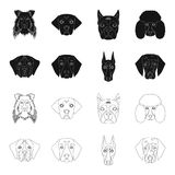 Muzzle of different breeds of dogs.Dog of the breed St. Bernard, golden retriever, Doberman, Dalmatian set collection. Icons in black,outline style vector Royalty Free Stock Photo