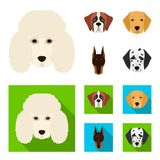Muzzle of different breeds of dogs.Dog of the breed St. Bernard, golden retriever, Doberman, Dalmatian set collection. Icons in cartoon,flat style vector symbol Stock Images