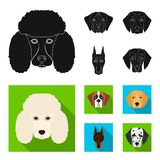 Muzzle of different breeds of dogs.Dog of the breed St. Bernard, golden retriever, Doberman, Dalmatian set collection. Icons in black, flat style vector symbol Stock Photography