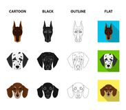Muzzle of different breeds of dogs.Dog of the breed St. Bernard, golden retriever, Doberman, Dalmatian set collection. Icons in cartoon,black,outline,flat style Royalty Free Stock Image