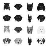 Muzzle of different breeds of dogs.Dog of the breed St. Bernard, golden retriever, Doberman, Dalmatian set collection. Icons in black,monochrome style vector Stock Images