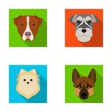 Muzzle of different breeds of dogs.Dog breed Stafford, Spitz, Risenschnauzer, German Shepherd set collection icons in Royalty Free Stock Images
