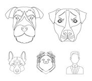 Muzzle of different breeds of dogs.Dog breed Stafford, Spitz, Risenschnauzer, German Shepherd set collection icons in. Outline style vector symbol stock Stock Photos