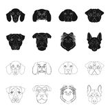 Muzzle of different breeds of dogs.Dog breed Stafford, Spitz, Risenschnauzer, German Shepherd set collection icons in. Black,outline style vector symbol stock Royalty Free Stock Photography