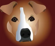 Muzzle of dog Royalty Free Stock Photography