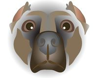 Muzzle of dog Royalty Free Stock Image