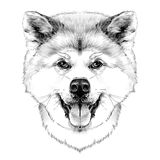 Muzzle dog breed Akita inu. Full face looking forward symmetrically, sketch vector graphics black and white drawing stock illustration
