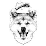 Muzzle dog breed Akita inu Royalty Free Stock Images