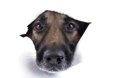 Muzzle dog close up Stock Images