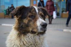 Muzzle dog, close up. Royalty Free Stock Photo