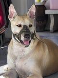 Muzzle dog. Stock Photo