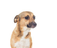 Muzzle dog on white background Stock Photos