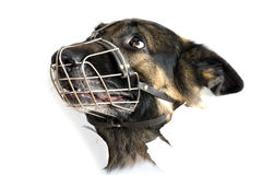 Muzzle dog on white close up Stock Images