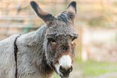 Muzzle of donkey Stock Images