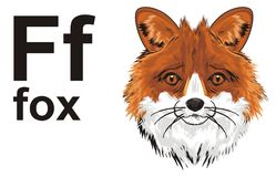 Snout of fox and abc. Muzzle of fox with her name and letters f Stock Images