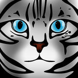 Muzzle gray cat with blue eyes Royalty Free Stock Photo