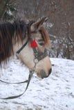 Muzzle of a horse. Stock Photos