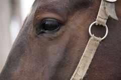 Muzzle of a horse Stock Photo