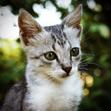 Muzzle kitten closeup. Against the background of foliage Stock Photos