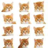 Muzzle kitten set Stock Images