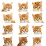 Muzzle kitten set Stock Images