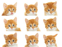 Muzzle kitten set Royalty Free Stock Photo