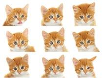 Muzzle kitten set Royalty Free Stock Photo