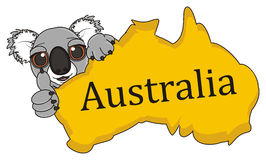 Muzzle of koala with Australian continent. Smiling face of koala peek up from Australian continent and show gesture cool Stock Photo