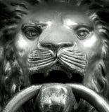 Muzzle lion Stock Photography