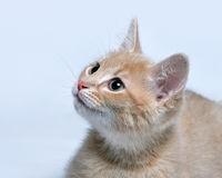 Muzzle of a little red ginger kitten close up Stock Photos