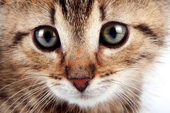 Muzzle Of A Striped Kitten Stock Images