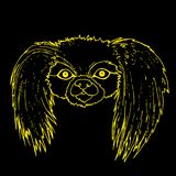 Muzzle Pekingese dog, yellow color outline isolated on black bac. Kground, vector hand drawing card with animal face.r Stock Image
